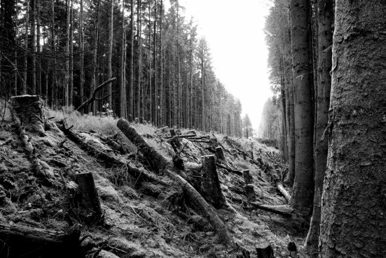 Cutting through Glenariff Forest Park