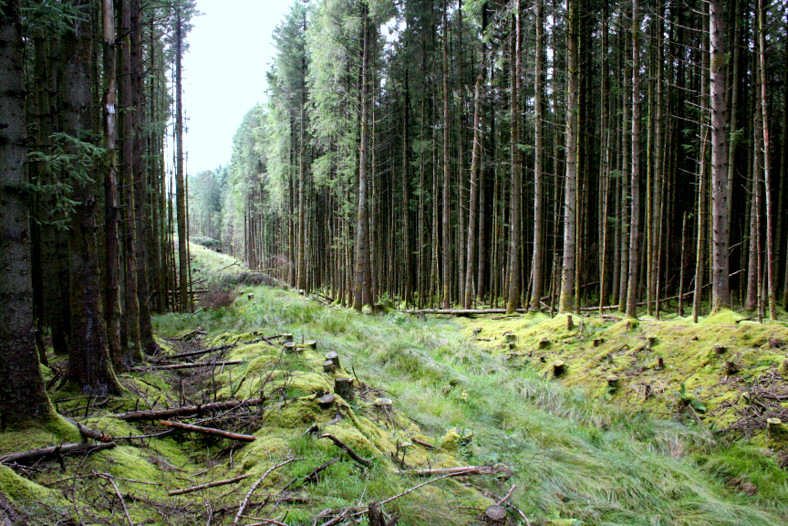 Forest cutting through Glenariff